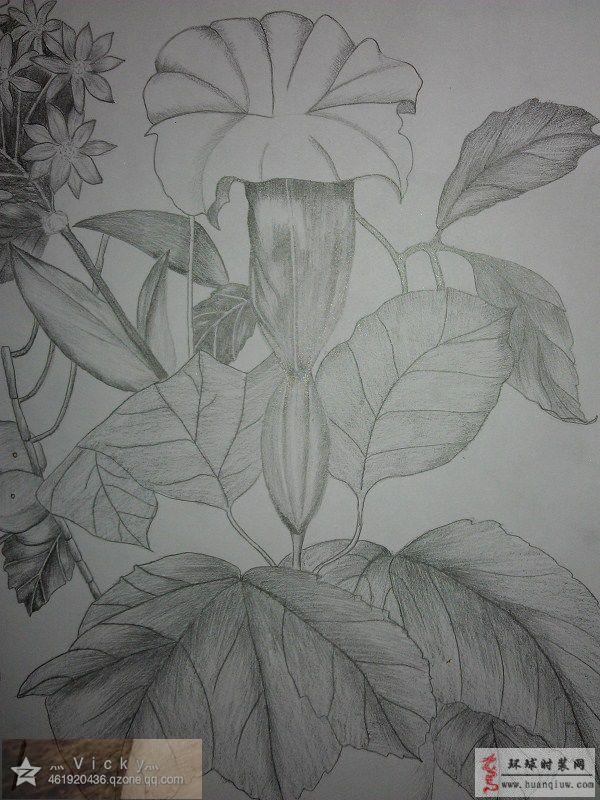 铅笔画花卉细节图-vicky莹莹的作品